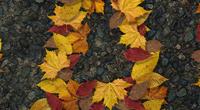 Autumn200